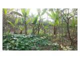 Jual Tanah Kebun dan Sawah di Caringin, Bogor Timur - 10.000 m2 - SHM