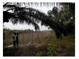 Jual Tanah Murah di tepi jalan lintas timur Pekanbaru - Duri km 18 Muara Fajar Rumbai Pekanbaru Riau