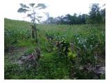 Jual tanah MURAH lahan pertanian daerah SUKABUMI