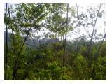 BELI Tanah Murah , GRATIS TANAH 2.000 M2 Dan GRATIS RATUSAN Pohon Jengjeng (Albasia)