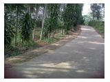 Tanah + Kebun Sengon Di Kawasan Indocement Cibinong Bogor