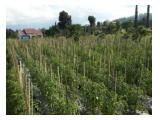 Dijual Tanah Kebun Daerah Batu Malang
