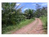 Di Jual Tanah ( Kebun Kelapa Sawit + Kebun Kelapa Biasa ), Daerah Sukabumi-Jawa Barat.