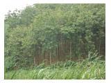 Jual Tanah Kebun Jati Emas, 3 HA - SHM, Dekat Waduk Cacaban, Kab. Tegal, Jateng.