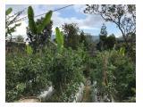 Tanah agrobisnis