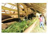 Tanah / Kebun Murah BU di Ciater, Subang, Lembang, Jalan Cagak, Subang
