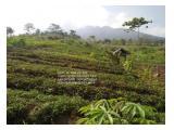 dijual tanah luas 50 Hektar; sold a land area of 50 hectares KabuptanTasikmalaya tidak jauh dari lokasi  Gunung Galunggung Ada Sumber Air
