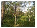 dijual tanah produktif 1 Hektar dekat area pariwisata batu ngampar Sukajadi Linggawangi  Kec. Leuwisari Singaparna Kab. Tasikmalaya