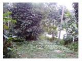 Dijual kebun manggis,kelapa,alba dll,2 Hektar,jalan hotmix Kab.Tasikmalaya  Dijual kebun manggis,kelapa,alba dll,2 Hektar,jalan hotmix Kab.Tasikmalaya