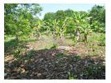 Tanah murah dijual di Sudimampir ds. Kaliangsana, Kalijati, Subang, Jawa barat