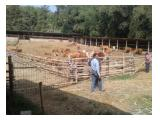 Dijual tanah di cibaraja sukabumi jawa barat