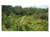Dijual Tanah di Cigombong Bogor