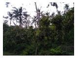 Jual Tanah di Selemadeg Tabanan Bali