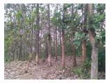 Jual Cepat Tanah dan Pohon Jati di Tulungagung