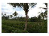 Jual Tanah/Kebun/Sawah di Tumpang Malang
