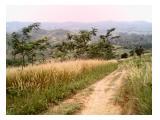 Jual tanah kebun 10 hektar