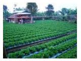 Jual Kebun plus saung berfasilitas di Cisarua-Bogor