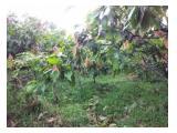 Jual tanah dan kebun coklat