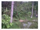 Tanah Strategis untuk bisnis Pariwisata di kawasan Wisata Rembangan Jember